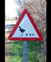 perill ocells